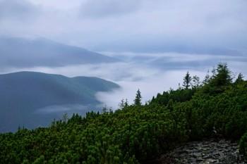 Карпаты в тумане